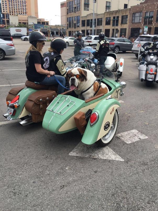 SXSW pup